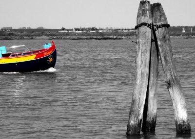 Barena_8_Venezia_ph tatstescenario