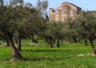 Taste-Scenario_viaggi-Abruzzo_ulivi-san-giovanni-in-venere