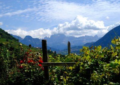 Taste-Scenario_viaggi-Alto-Adige_vigne-e-dolomiti