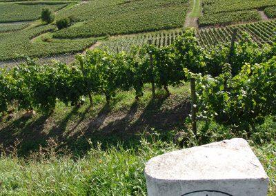 Taste-Scenario_viaggi-Champagne_vigne-Moet&Chandon