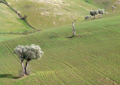 Taste-Scenario_viaggi-Pasta_campo-grano-verde