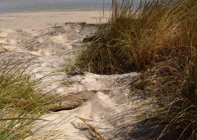 Taste-Scenario_viaggi-Puglia_mare-e-dune