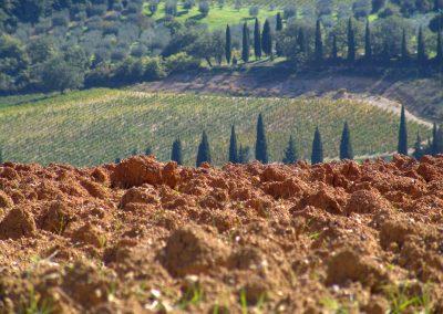 Taste-Scenario_viaggi-Rinascimento_paesaggio-toscana
