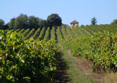 Taste-scenario_viaggi-Armagnac_paesaggio-viti