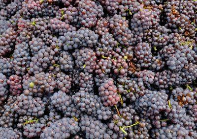 Taste-Scenario-Vini-Wines-e-uva-grapefruit