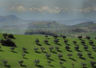 Extravirgin olive oil and its landscapes