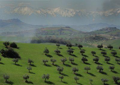 L'olio extravergine di oliva e i suoi paesaggi
